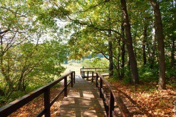 Природный парк «Куркино»3