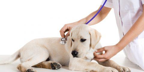 ветеринарные клиники района куркино