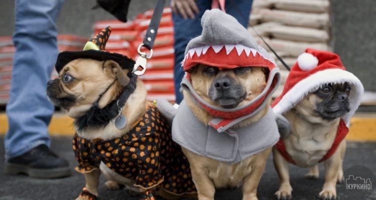 карнавал собак в куркино