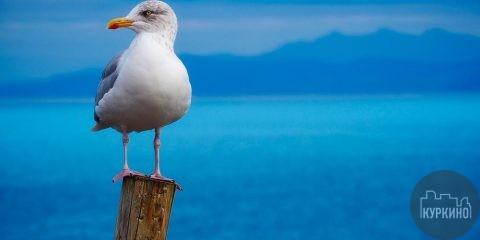 В парке «Дубрава» пройдет детская программа «Море! Скнигой наодной волне»