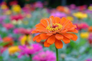 цветочное оформление в куркино, благоустройство