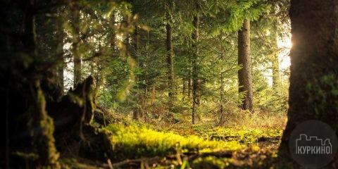Алёшкинский лес сзао куркино