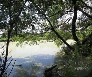 куркинский пруд в куркино