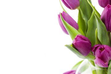 точки продаж цветов к 8 марта в куркино
