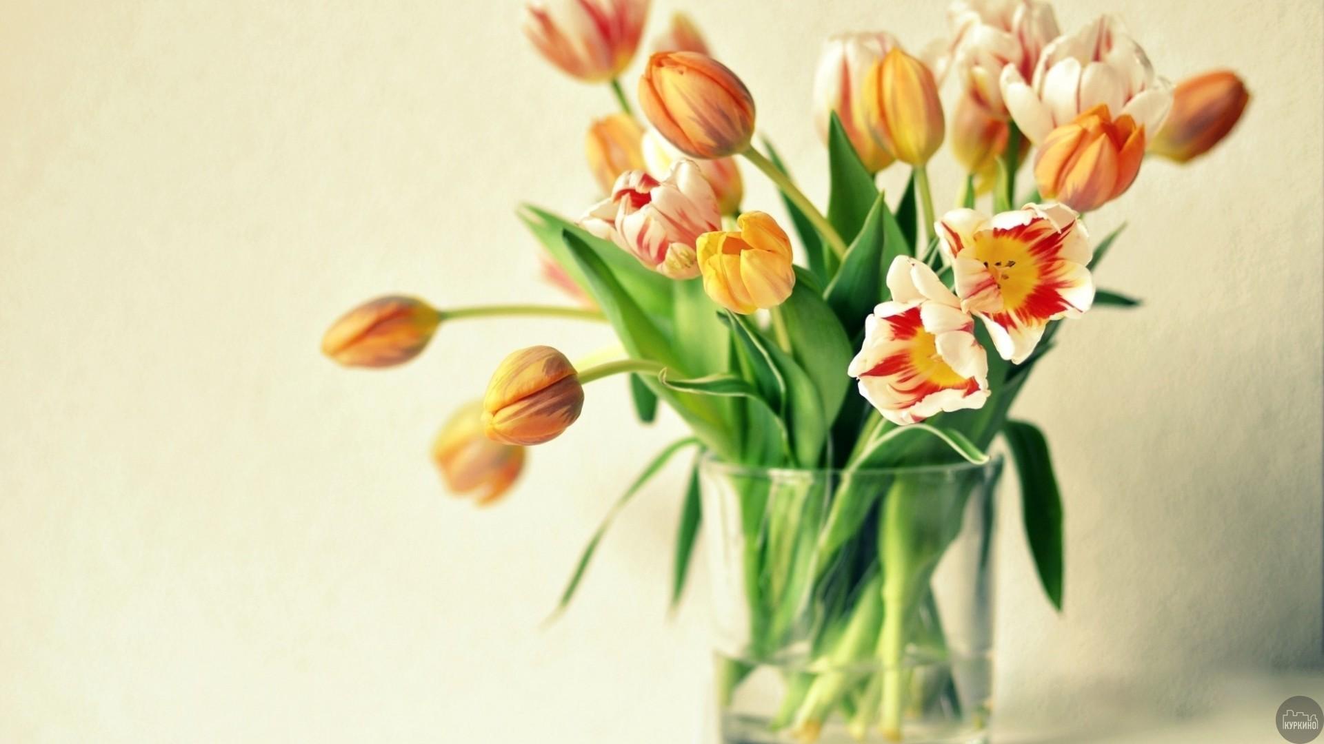 купить цветы в куркино