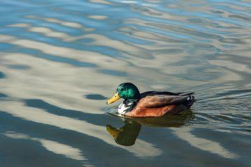 экскурсия по машкинскому ручью в куркино