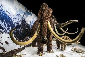 музей ледниковый период