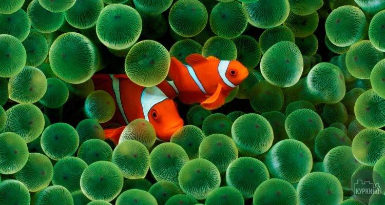 рыбы водоема сзао