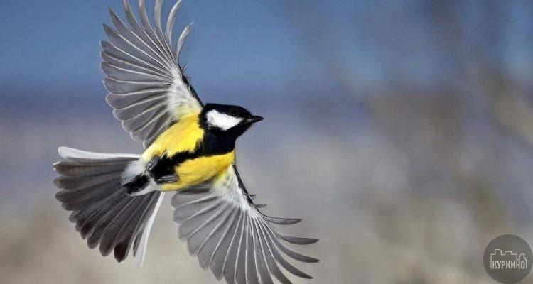 кружок про птиц в куркино