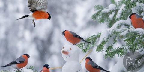 чем кормить птиц в парках куркино