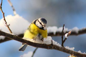 мастер класс по кормлению птиц в куркино