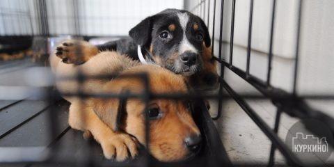 акция сбор подарком для бездомных собак
