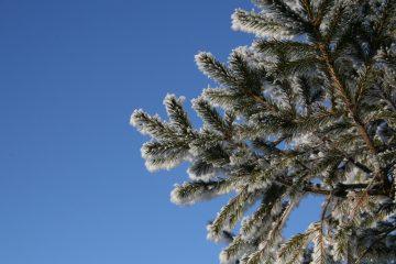 алешкинский лес в сзао