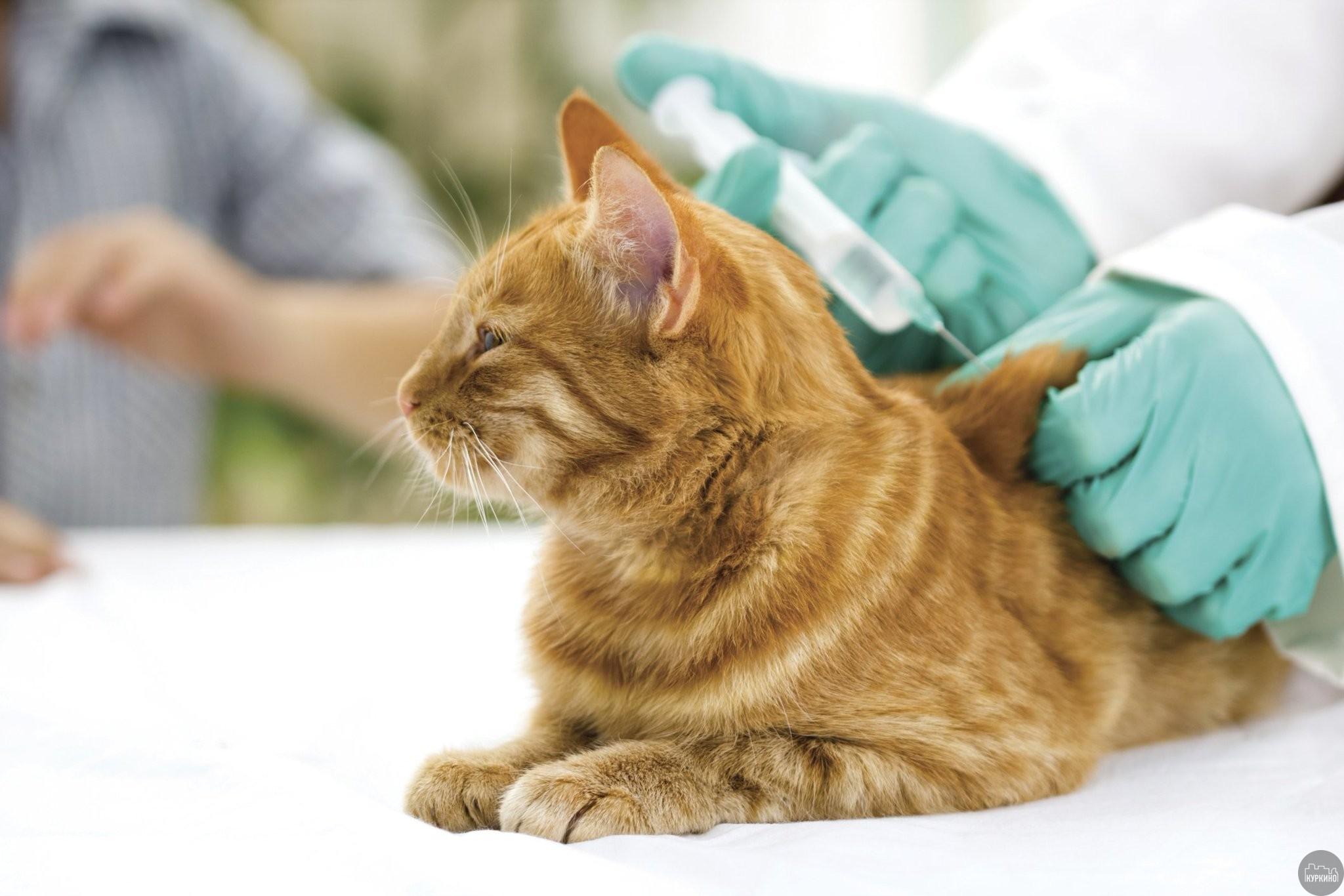 вакцинация животных в куркино