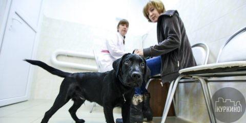 прививочные пункты вакцинации домашних животных