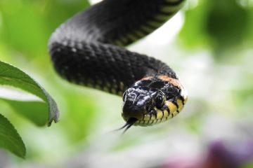 В Куркине сотрудники Мосприроды расскажут про змей