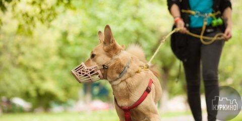 Правила выгула собак на ООПТ