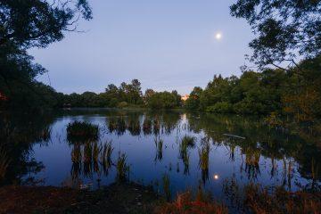 Ручьи и пруды района Куркино