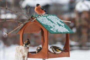 Чем можно кормить птиц зимой?