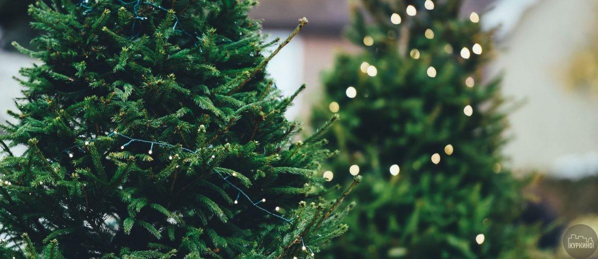Прием новогодних елей в МЕГА Химки