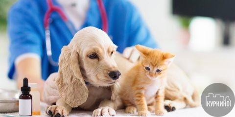 Пункт вакцинации животных в Куркино