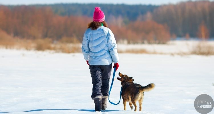 Как лучше всего выгуливать собаку зимой?