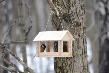 День птиц в районе Куркино