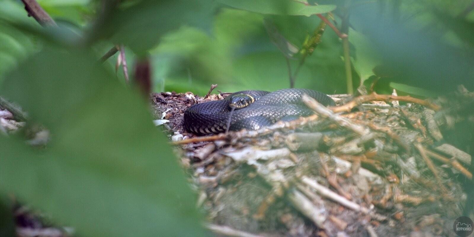 Правила поведения при встрече со змеей