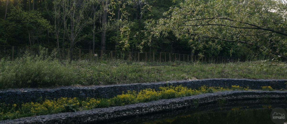 В парке Долина реки Сходни обнаружены тритоны
