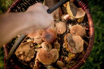 сбор грибов в долине реки сходни запрещен